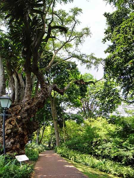 Fort Canning Park, Hiking in SInagpore
