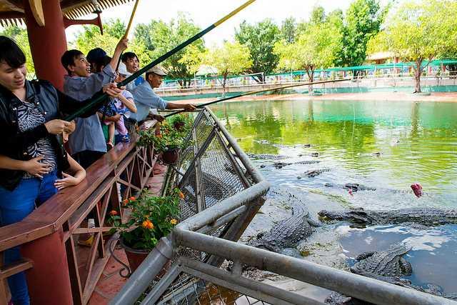 Crocodiles at Suoi Tien Theme Park