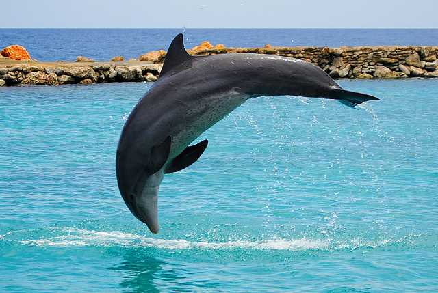 Dolphin, National Parks in Seychelles