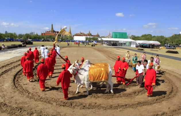 The Ceremonial Ploughing at Sanam Luang, Royal Ploughing Ceremony