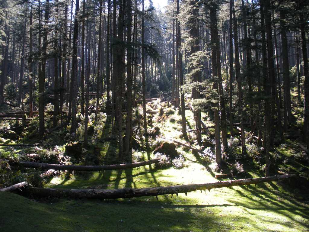 Khajjiar in Summer