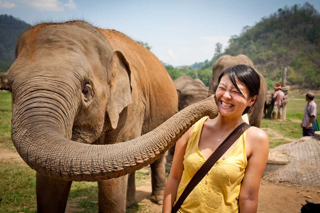 Rantong Elephant Rescue, Chiang Mai Thailand