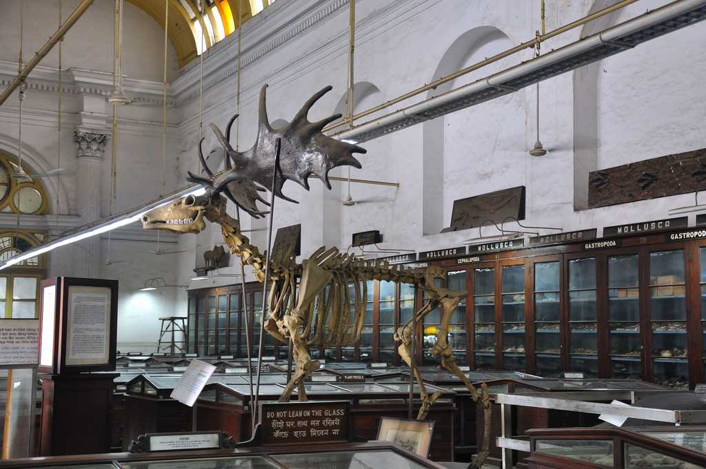 art galleries in india, indian museum kolkata