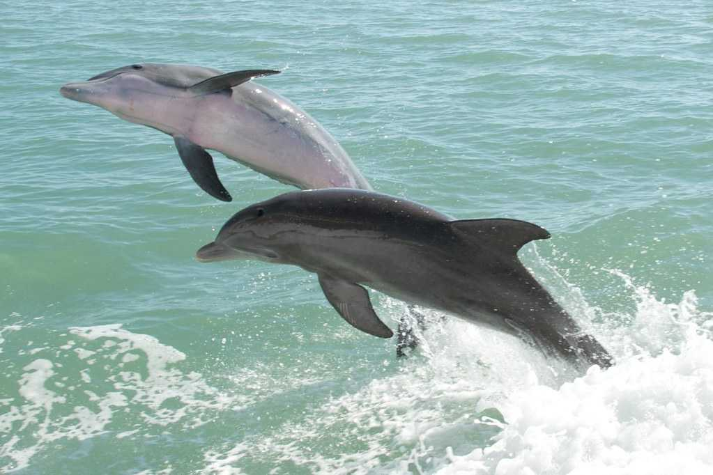 Dolphin Watching in Muscat