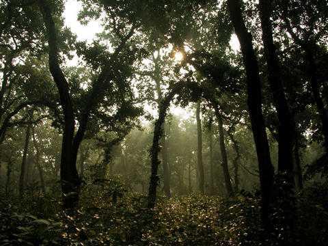 Sal Trees, Wildlife Sanctuaries in Bhutan