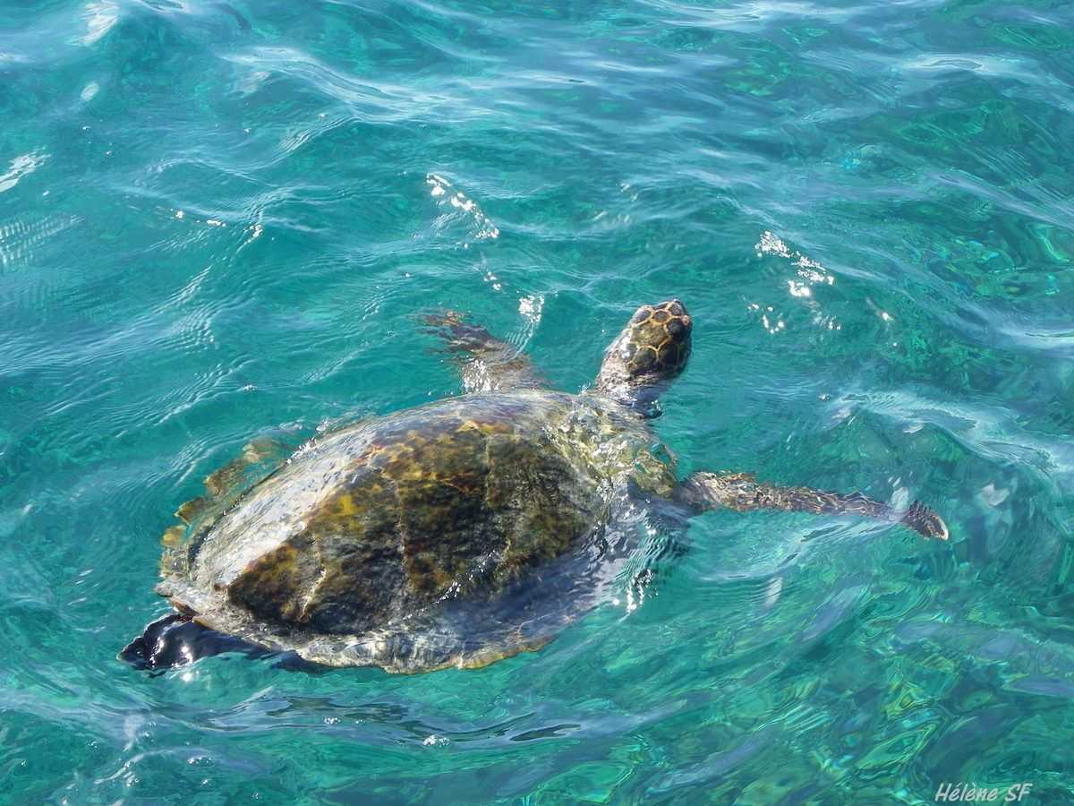 Grand Soeur Seychelles