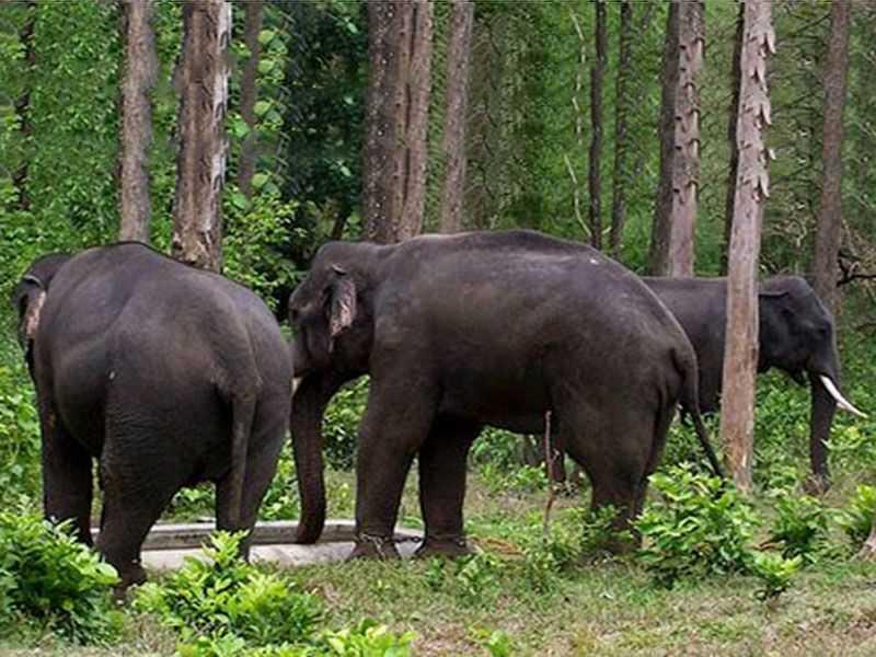 Elephants in Mrugavani National Park