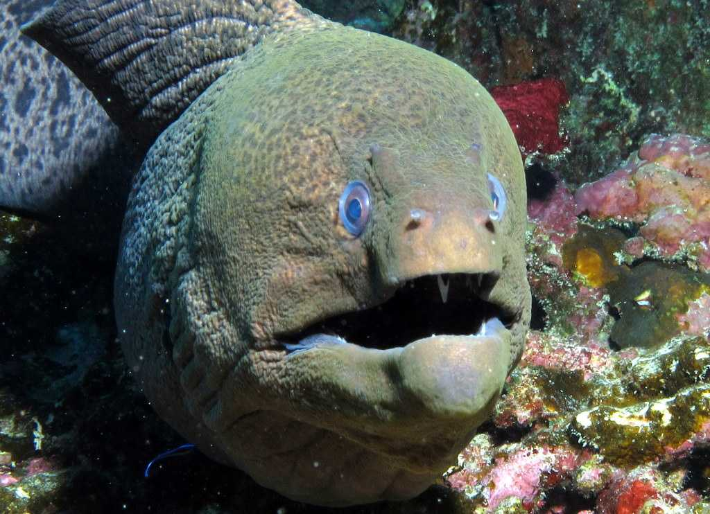 Moray Reef, Scuba diving in Mauritius