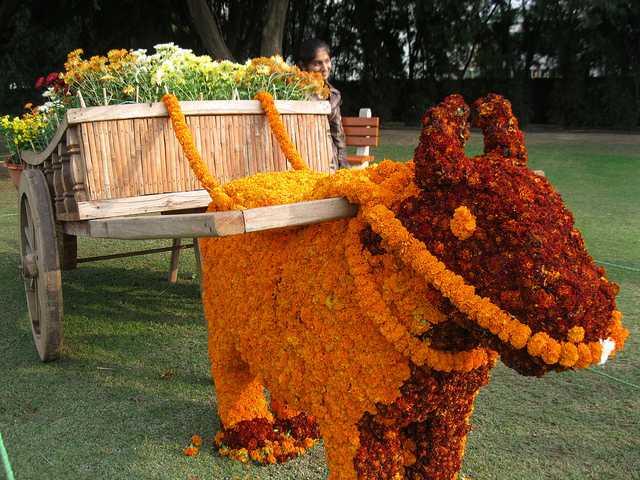 Peculiar Arrangement Of Flowers