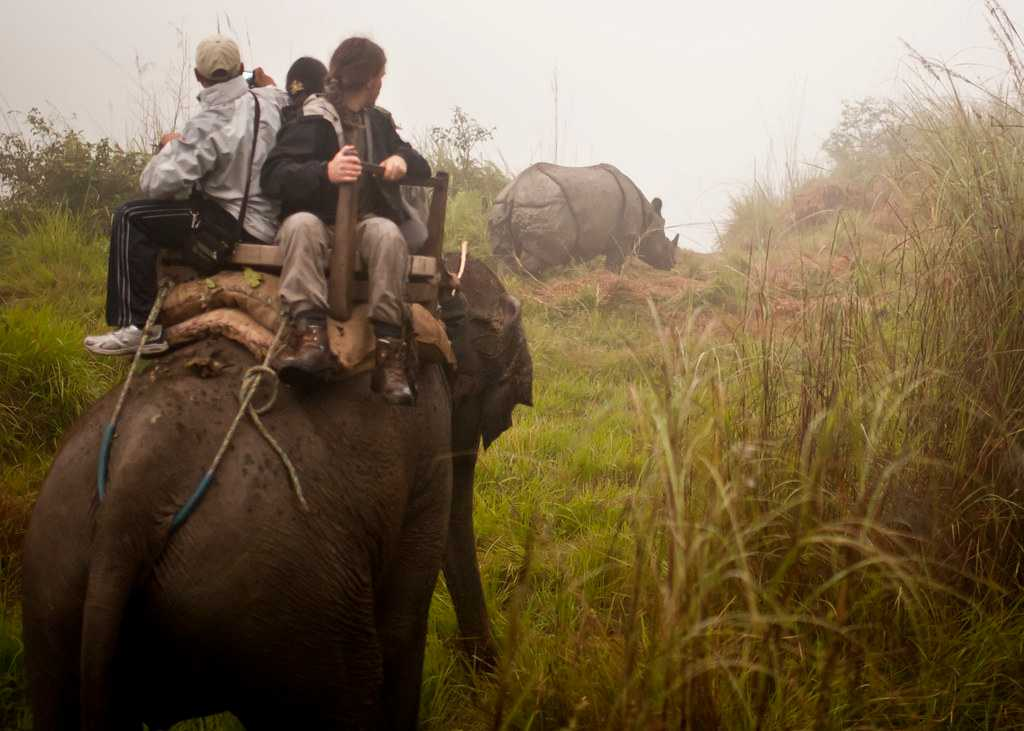 Chitwan National Park, an irresistable natural landscape of Nepal.