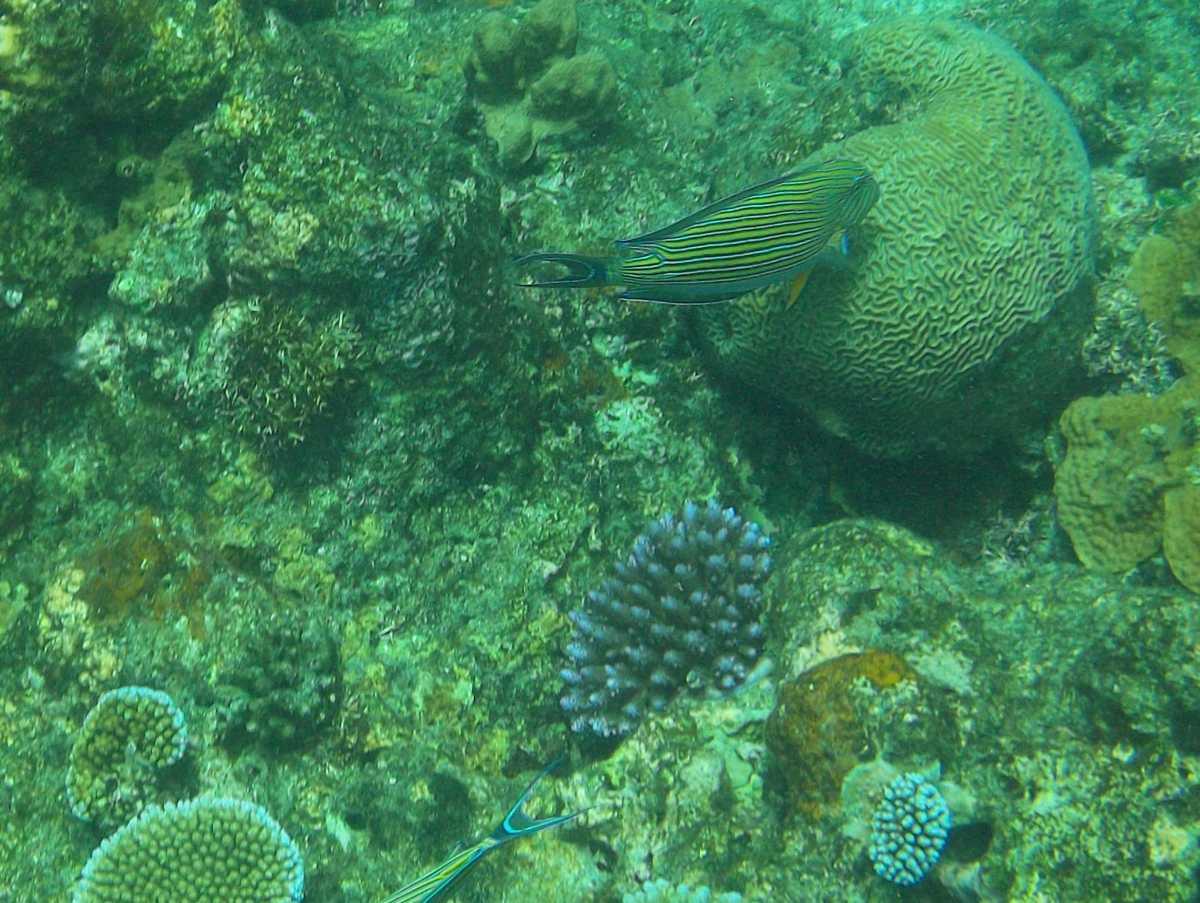 St. Pierre, Island hopping in Seychelles