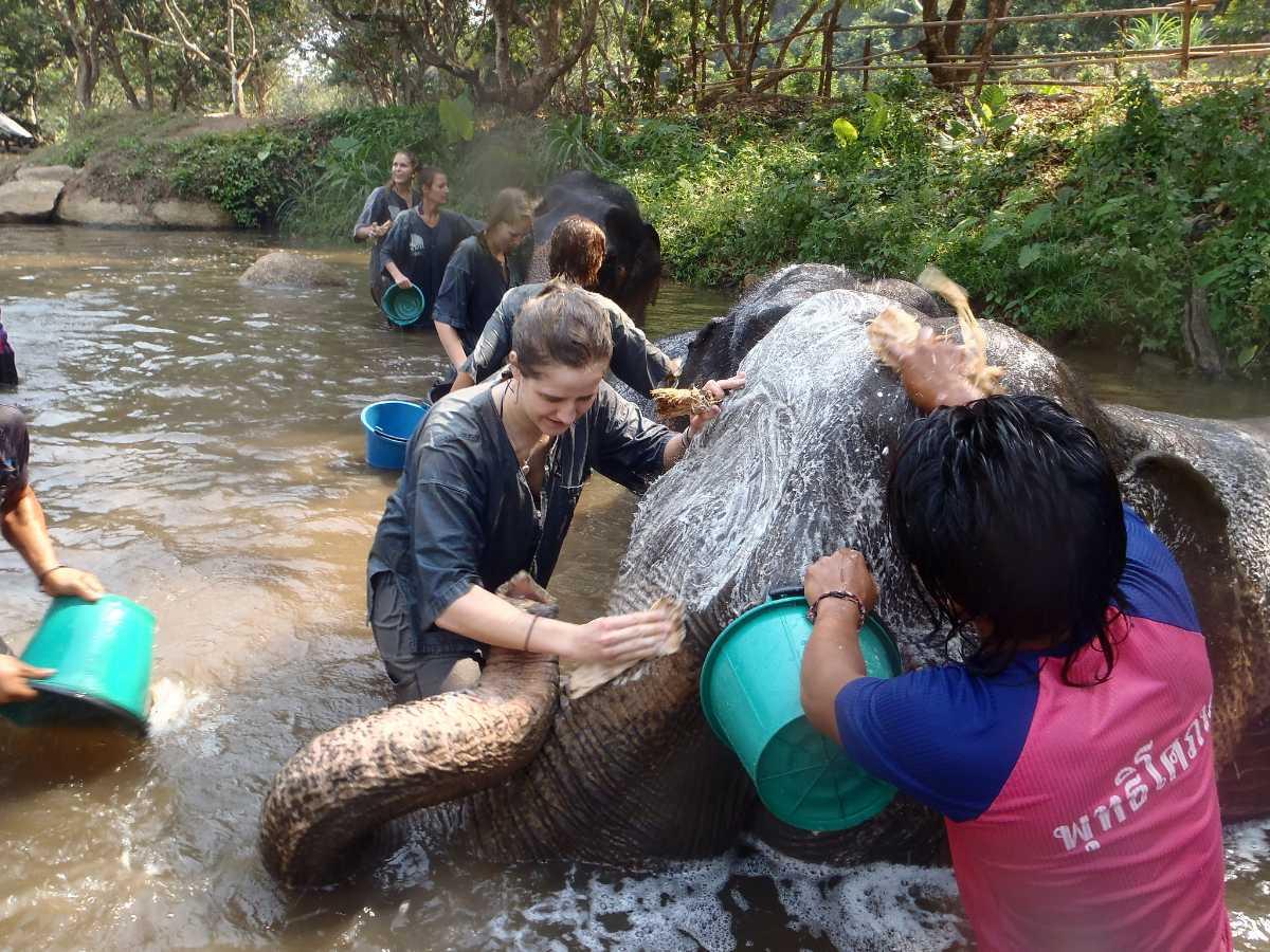 Volunteering in Elephant Sanctuary Thailand