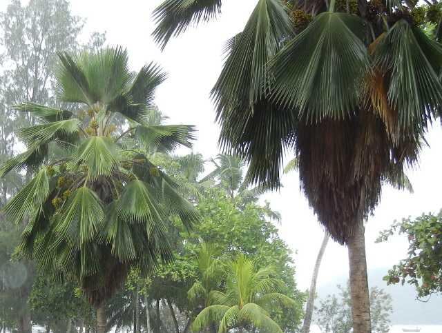 Rain in Praslin, Seychelles weather in july