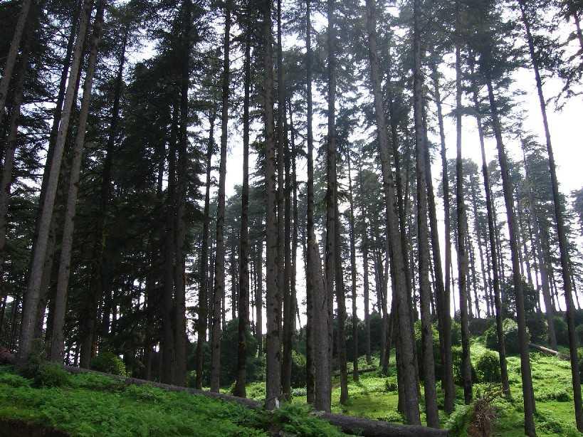 Dhanaulti, Camping in Uttarakhand