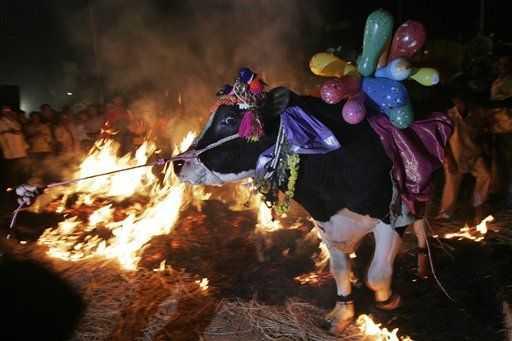 Makara Sankranthi, Festivals In Bangalore