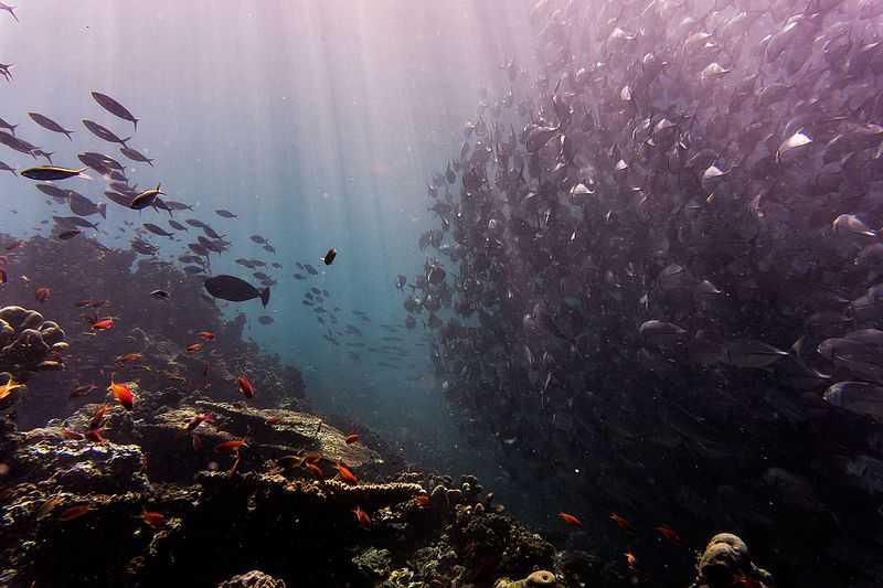 Sipadan Island, Scuba Diving in Sabah