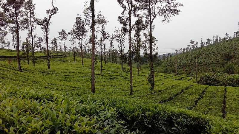 Coffee Plantations in Coorg (2020) - Tour Price, Details ...
