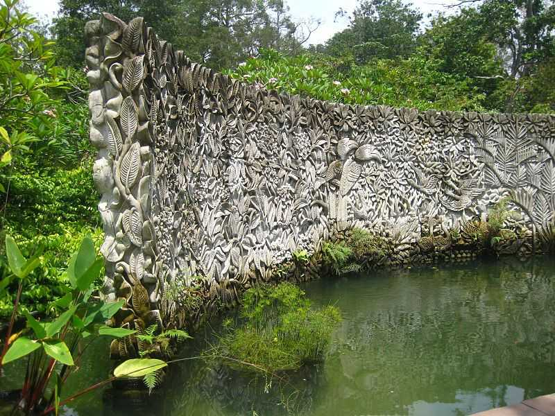 Farfugium Fountain at Singapore Botanic Gardens