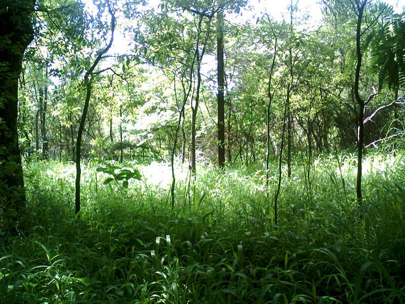 Places to Visit at KBR National Park