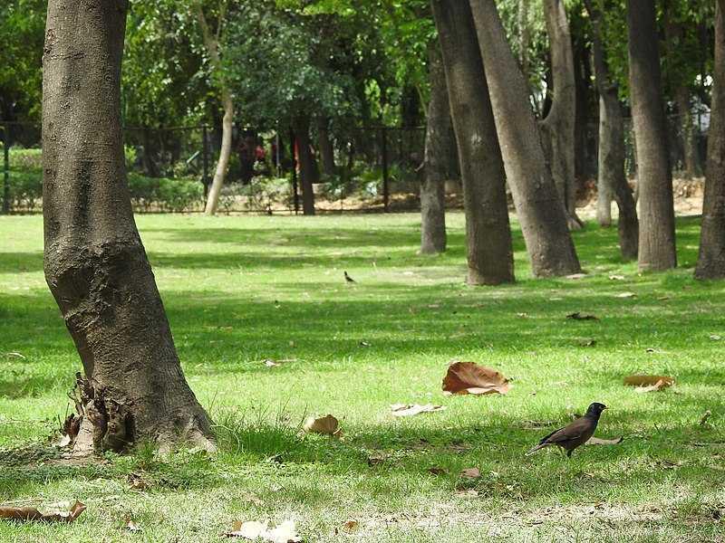 Image result for deer park delhi