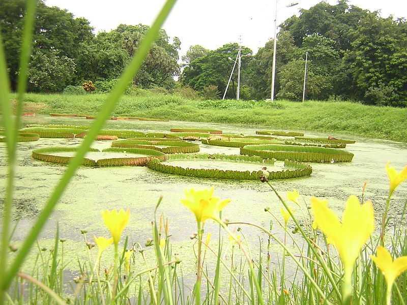 A Lake in the Kolkata Botanical Gardens
