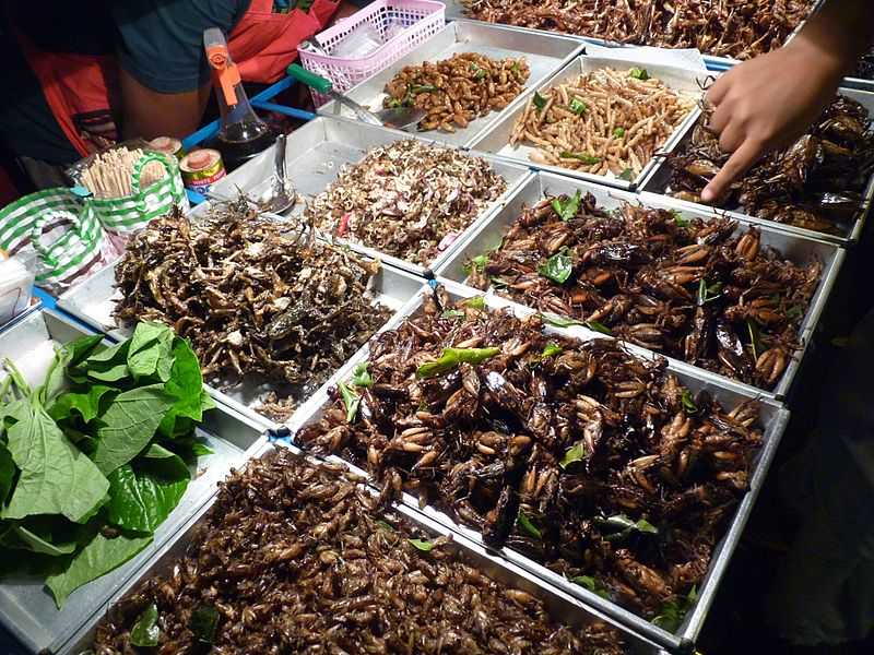 https://upload.wikimedia.org/wikipedia/commons/thumb/9/9a/Insect_vendor_in_Bangkok%2C_Thailand.JPG/800px-Insect_vendor_in_Bangkok%2C_Thailand.JPG