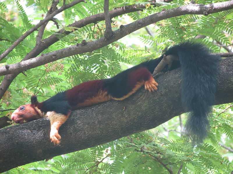 Wildlife near Valparai