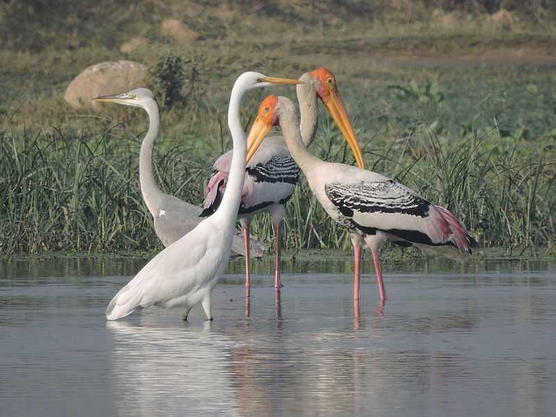 Maharana Pratap Bird Sanctuary