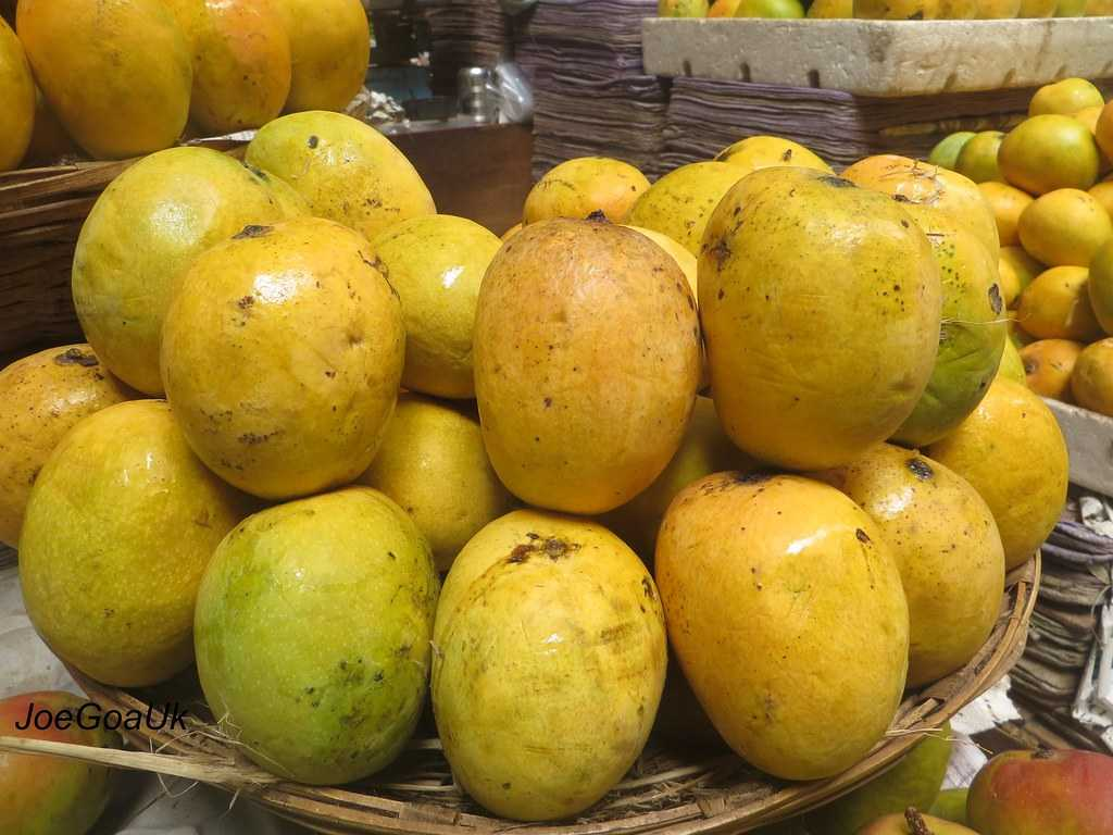 Mankurad Mangoes, Mangoes in India
