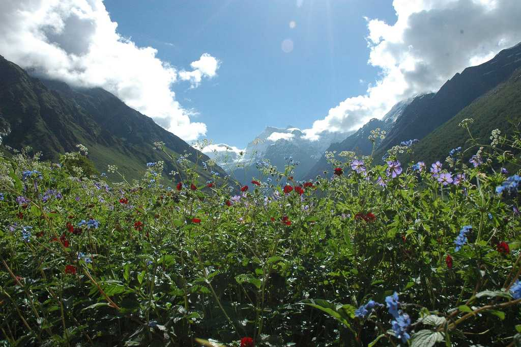 Valley of Flowers in Summer