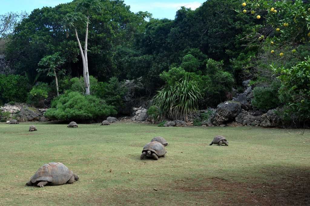 Tortoise in the reserve