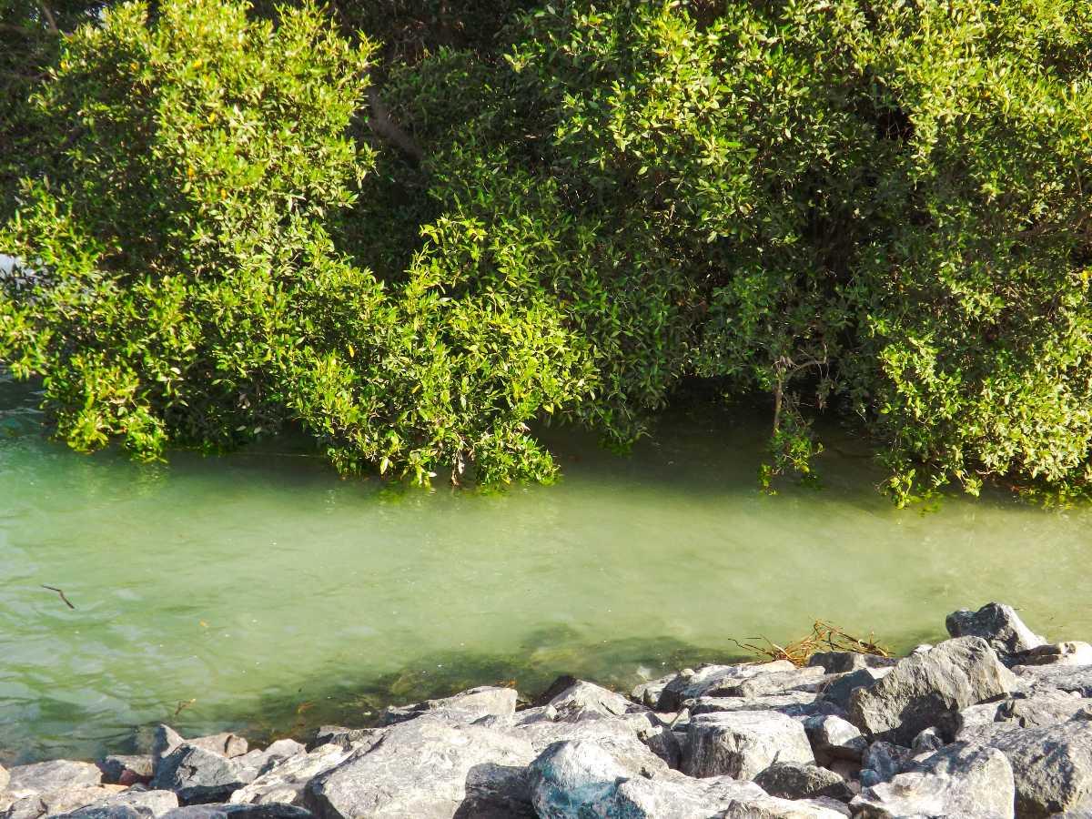 Eastern Mangrove Lagoon National Park