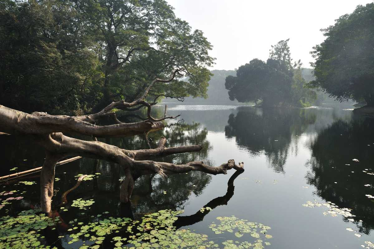 The Acharya Jagadish Chandra Bose Indian Botanic Garden