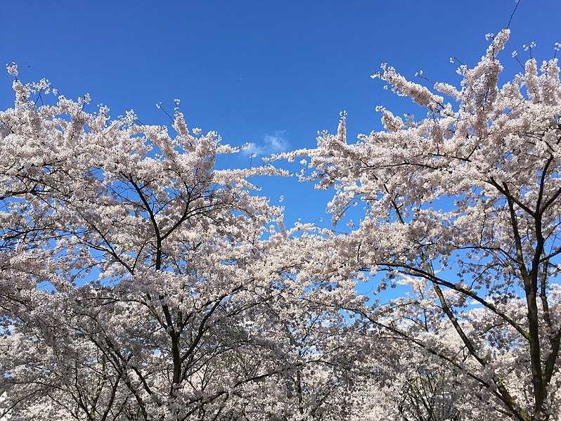 Amstelveen, Best Places In The World To See The Spring Blossoms In Its Peak!