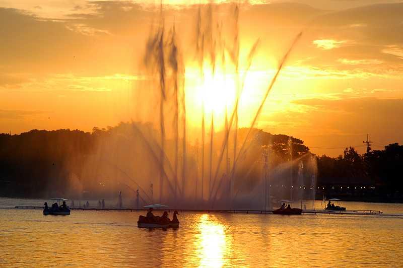 Swan Boats at King Rama IX Park