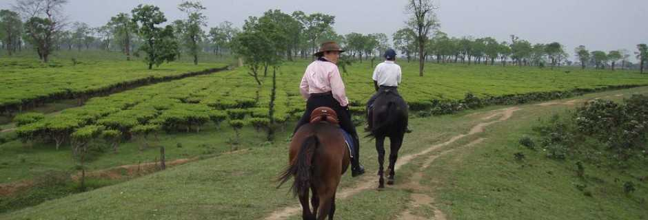 Horse Riding In India. In the Saddle Horse Riding Vacation