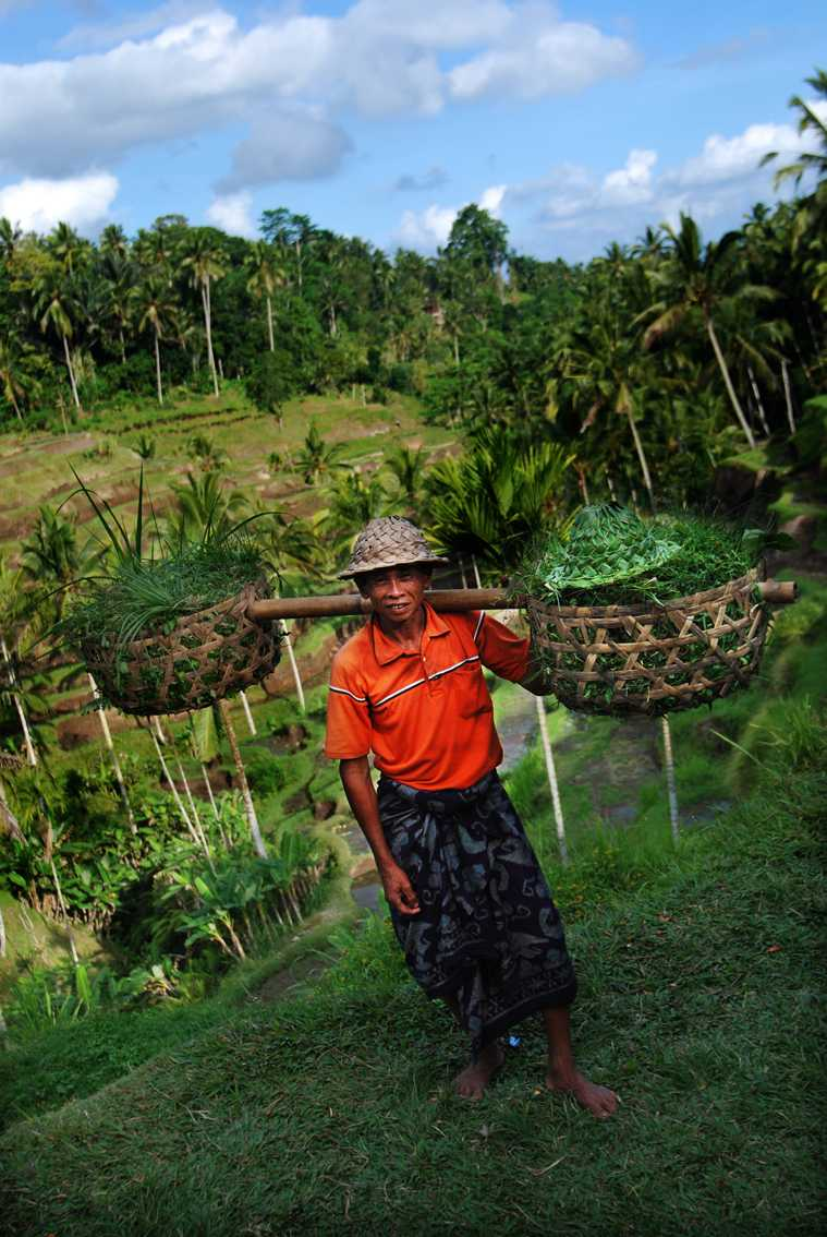 Balinese Farmer at Tegalalang Rice Terraces
