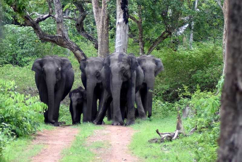 Bandipur National Park, Places to visit in South India