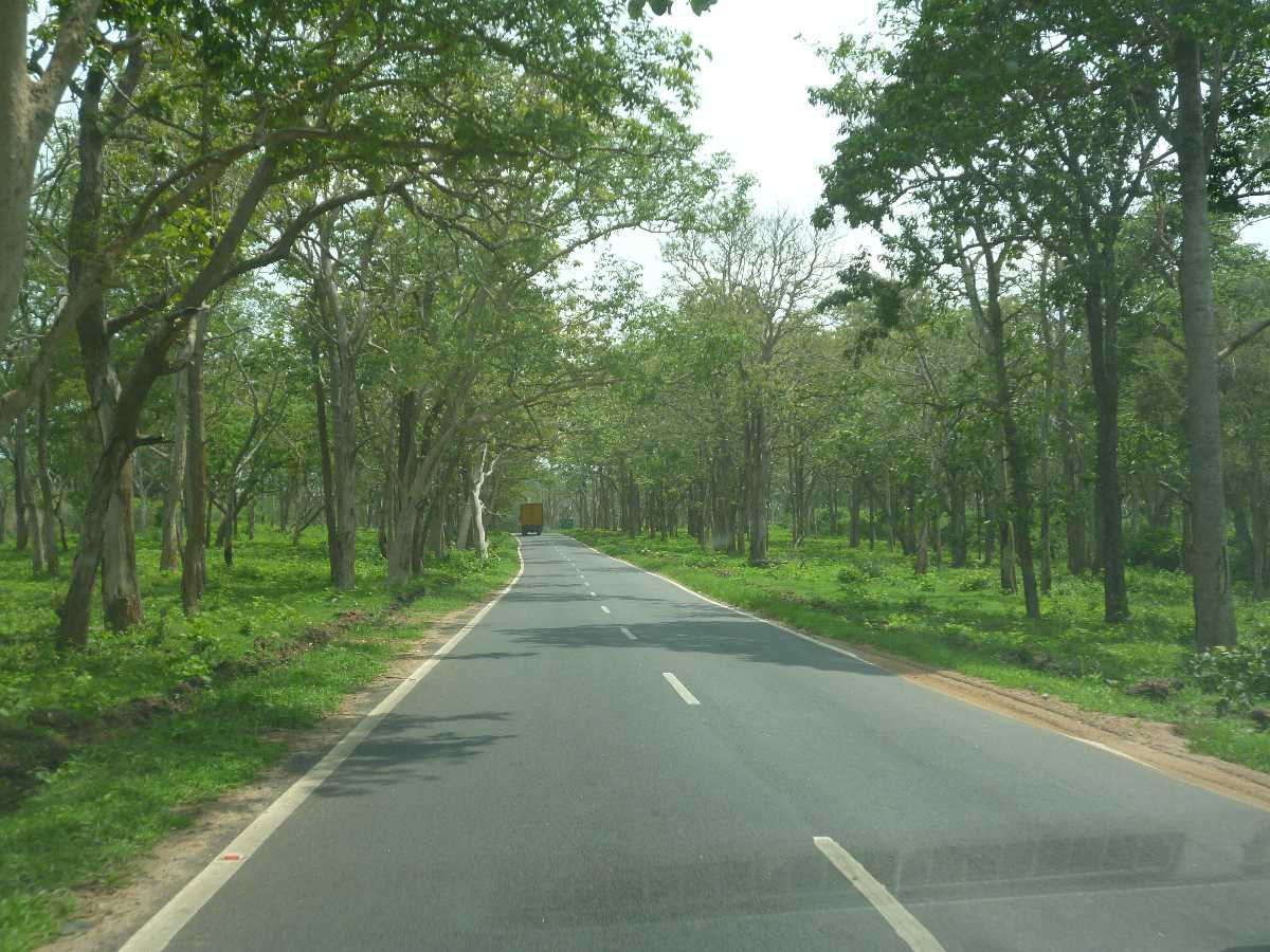 Bandipur Forest Roads