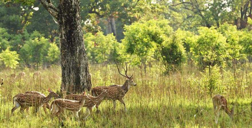 Deer at Bardia National Park, National parks in Nepal