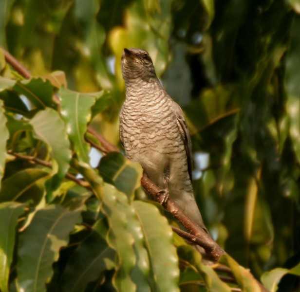 Birdwatching at Kinnersani