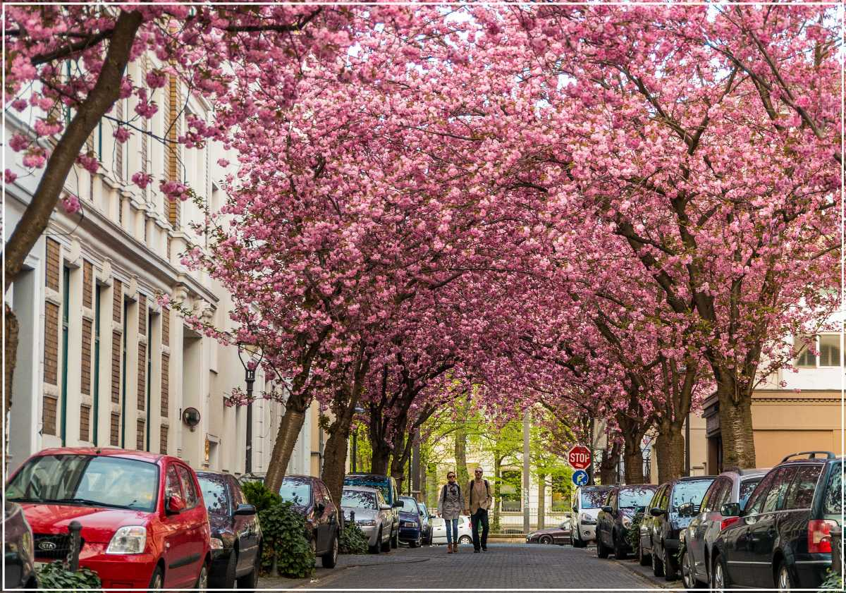 Bonn, Best Places In The World To See The Spring Blossoms In Its Peak!