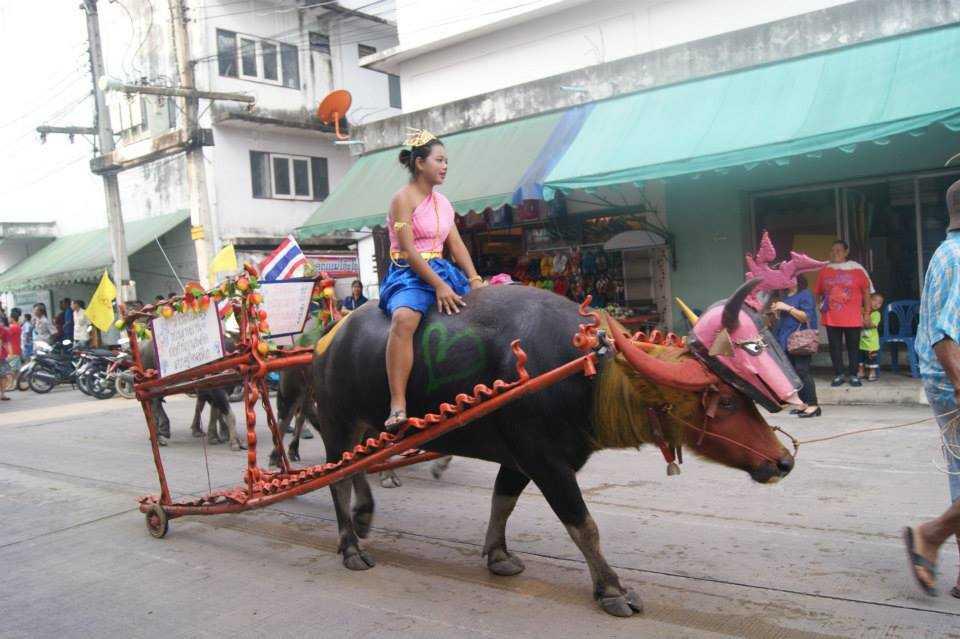 Buffalo Racing Festival of Thailand