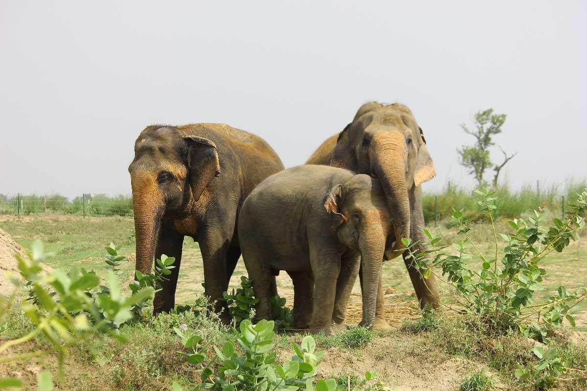 Elephants in ECCC