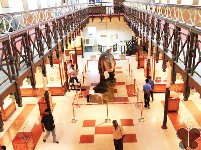 art galleries in india, government museum chennai