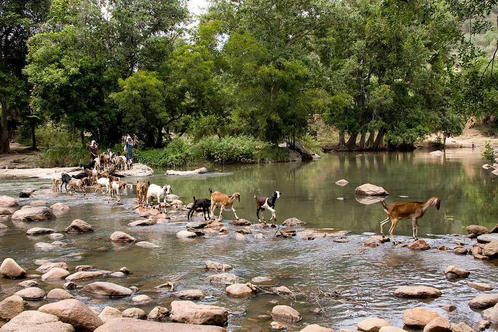 Chinnar Wildlife Sanctuary, Munnar (Kerala) - Timings