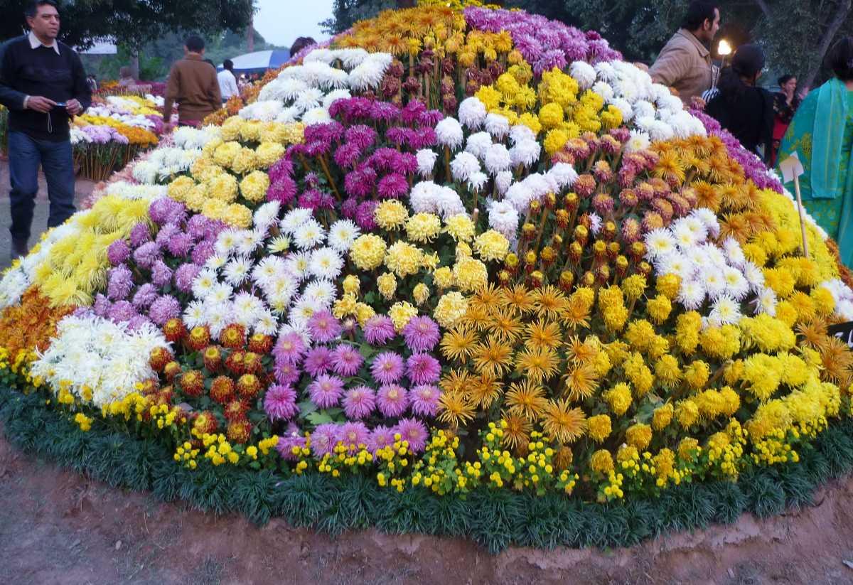 Flowers Arranged In Beautiful Patterns