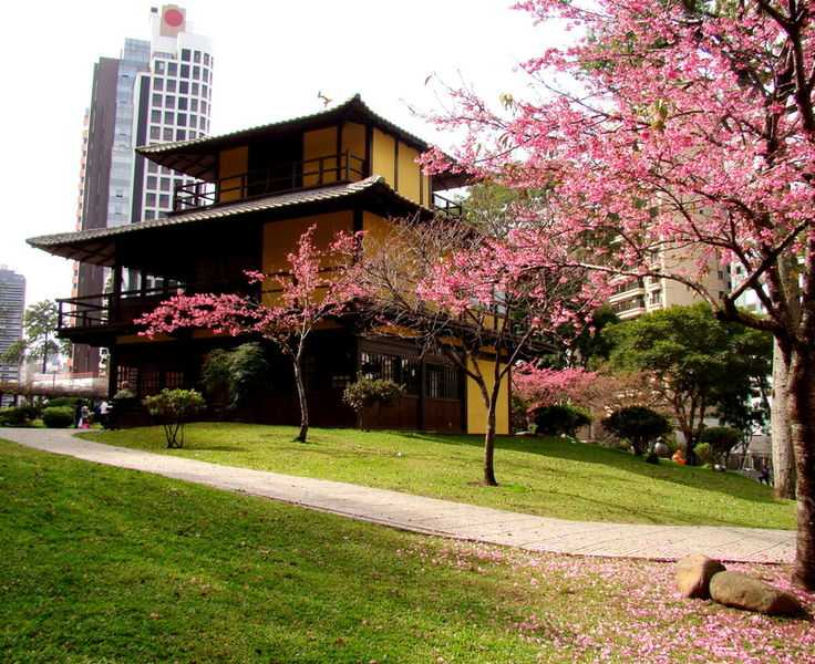 Curitiba, Best Places In The World To See The Spring Blossoms In Its Peak!