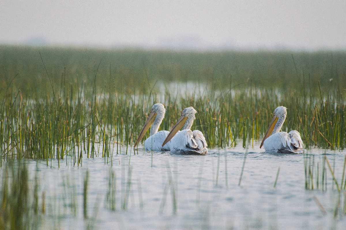 Nalsarovar Bird Sanctuary