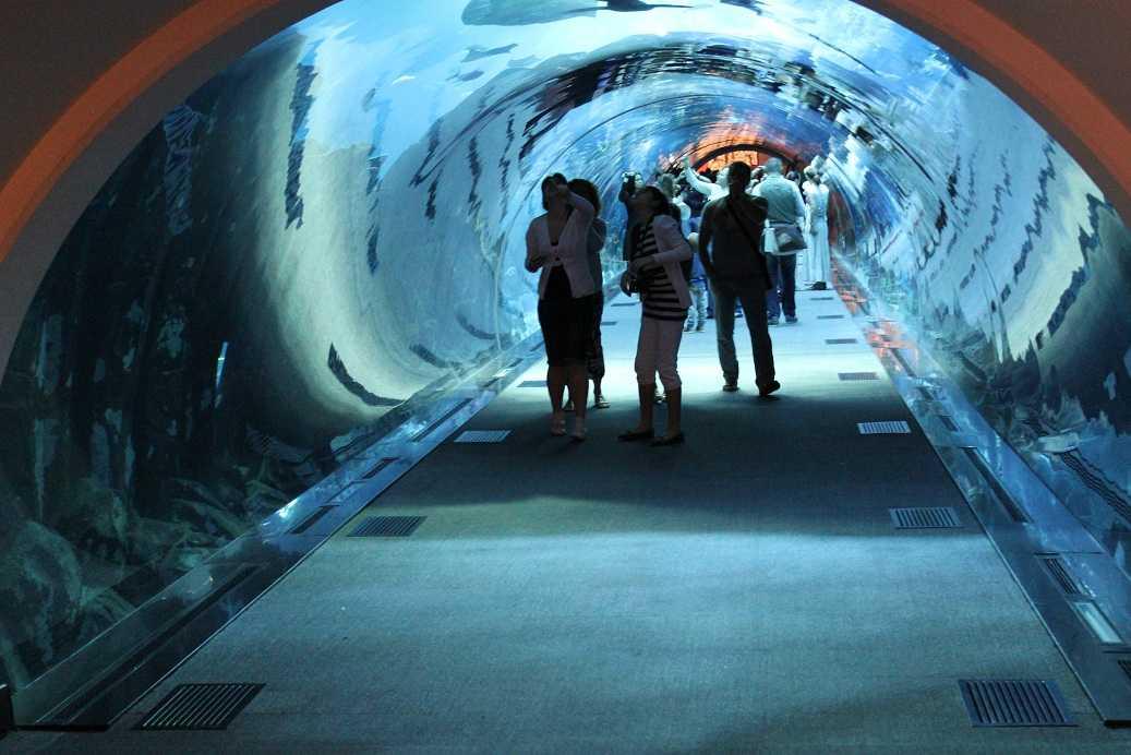 Mall of Muscat Aquarium